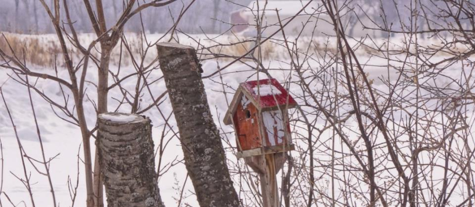 Winter Bird House